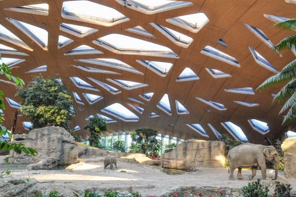 Elefantenhaus Zürich IBP 2015 Presitäger
